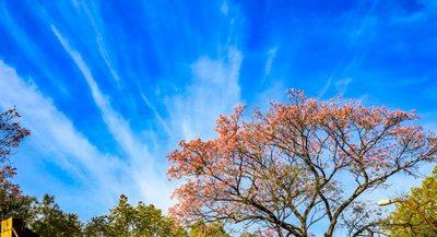 Meteorología anuncia una jornada de fría a cálida y cielo despejado