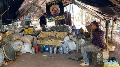 SENAD incautó 7,4 Toneladas de Marihuana en mega campamento narco