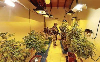 """Preliminar de acusados por caso """"marihuana VIP"""" se hará la próxima semana"""