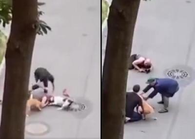 Protege con su cuerpo a su anciano perro del feroz ataque de dos american staffordshire terriers (Video)