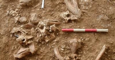 La Nación / Descubren en Israel una nueva especie de hombre prehistórico