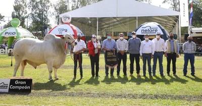 La Nación / La Expo Nelore premió a sus grandes campeones
