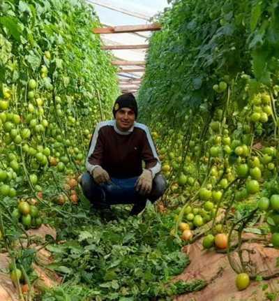 Con apoyo del CAH, joven emprendedor incursiona en el cultivo de tomates de excelente producción