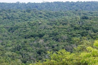 Descubren que plantar árboles 'atrae' más lluvias en verano