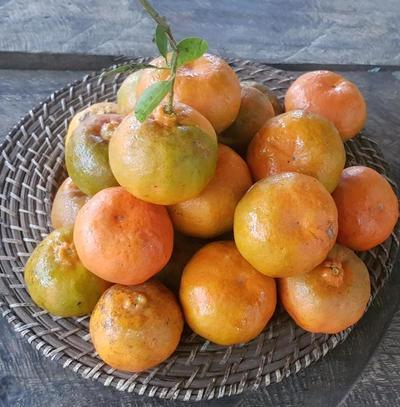 Circuito de las mandarinas se realizará este fin de semana en Itacurubí
