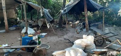 Ocasionan grandes pérdidas de cultivos de marihuna a narcos del Amambay