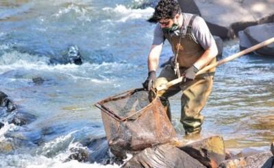 Itaipu siembra 5.000 peces juveniles en el Río Ñacunday