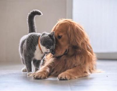 ¿Sabés quién se queda con la mascota si la pareja se divorcia?