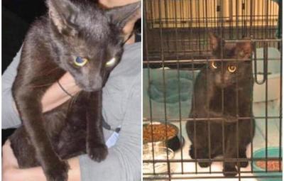 Hallan a gato desaparecido tras colapso de edificio en Miami