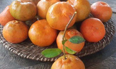 Circuito de las mandarinas como opción para el fin de semana