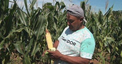 Cada vez más campesinos se asocian y cultivan granos en San Pedro