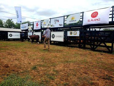 Braford realizará en septiembre feria de reproductores y terneros de élite, con ventas de El Rodeo