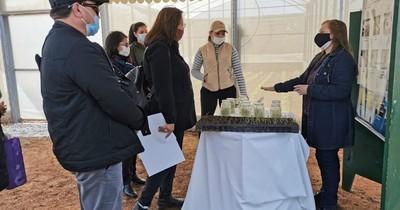 La Nación / El IPTA busca mejorar los cultivos de papa y cebolla