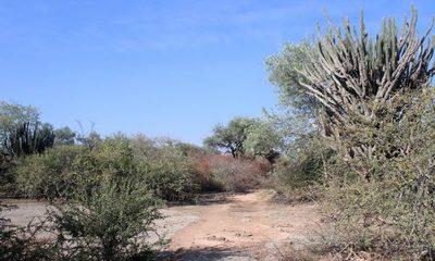 Los bosques secos o Chaco Seco de la región occidental: nuestros cambios inducidos