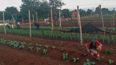 Comuna de Hernandarias asiste con huerta a familias de  asentamiento
