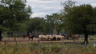 Abigeos siguen aplicando golpes en el norte