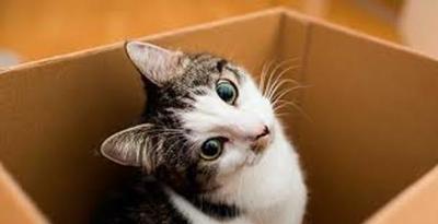 Los mitos y verdades que rodean a los gatos
