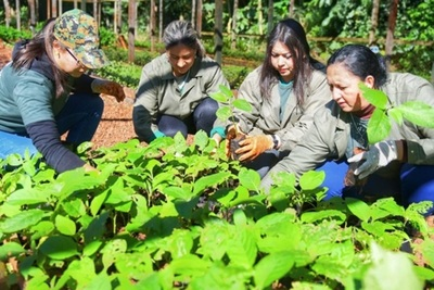 Día del Árbol: ITAIPU cerrará el año con más de 2.300 hectáreas de bosques restaurados