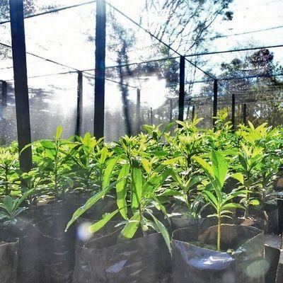 Vivero de Itaipú produjo 721.485 plantines en el primer semestre