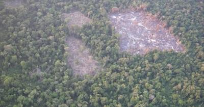 La Nación / Ni la pandemia detiene la destrucción de los bosques en las reservas