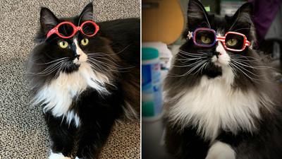 Ma´ena, michi ayuda a los niños a sentirse cómodos con sus nuevos lentes (Video)