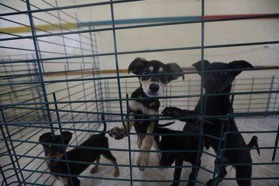 Soldados al rescate de perros callejeros