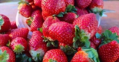 """La Nación / Campaña """"coseche, pese y pague"""": invitan a disfrutar de un domingo en Areguá alrededor de frutillas"""