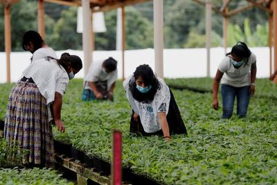 La FAO alista un programa de 66 millones de dólares para la agricultura de Guatemala