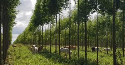 La Nación / Invasión de propiedad privada con reforestación pone en riesgo inversiones