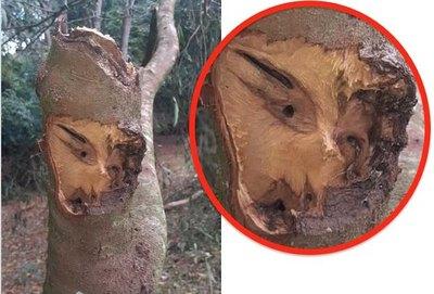 Crónica / Conmoción por rostro en un árbol caído