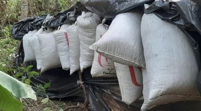 Paraguay y Brasil destruyeron más de 260 hectáreas de cultivos ilícitos en Amambay