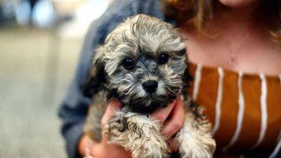 Domesticación del perro cambió su apariencia y mente, según estudio