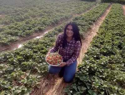 Joven emprendedora apuesta a la producción de frutilla en Cordillera