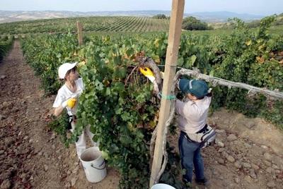 IICA resalta la agricultura orgánica para la contribuir a la inclusión de género