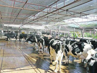 Buscan modificar ley de lechería para disponer fondos para sanidad
