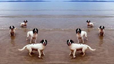 Los tres perros de Tilda Swinton, recompensados con la Palm Dog de Cannes