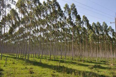 UGP alerta posible bloqueo de SUACE para empresas forestales