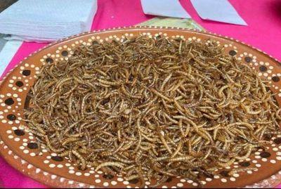 Europa certificó a un gusano como alimento seguro para el consumo humano.