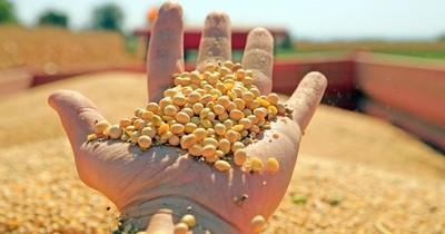 La Nación / Caen exportaciones de soja por malas condiciones de navegabilidad