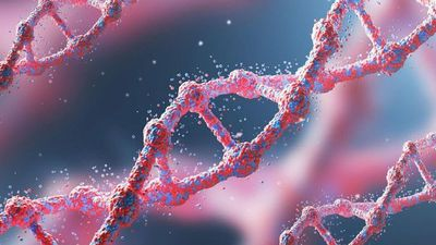 Del 1,5% al 7% de nuestros genes es exclusivo de nuestra especie
