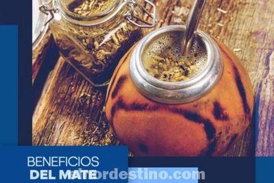 Universidad Sudamericana presenta los impresionante beneficios de la yerba mate, la infusión más popular en nuestra región