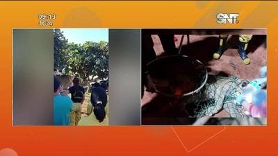 Rescatan a un puma en Canindeyú