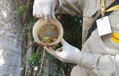 Reportan leve descenso de casos de dengue