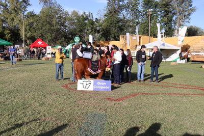 Brangus aseguró el futuro: un ternero de Herrera Agrocomercial S.A. fue el Gran Campeón