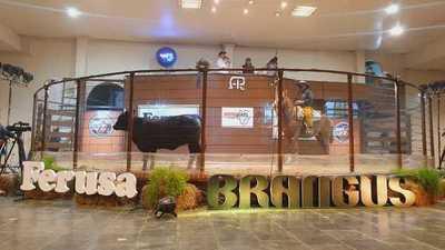 Ferusa remata hoy lunes reproductores de campo y bozal en la Expo Brangus