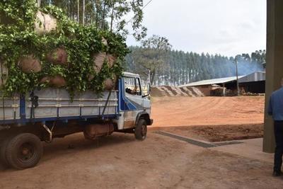 Buscan incluir al paisaje cultural de la yerba mate de Paso Yobái a lista de la Unesco
