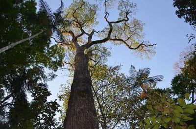 Récord de árboles inscriptos para concurso Colosos de la Tierra