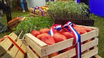 Con apoyo de la EBY, horticultores de Juan O'Leary inician cosecha de tomate