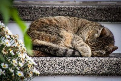 """Cárcel para """"salvadora"""" de gatos que los mataba de hambre en su apartamento"""