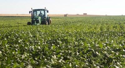 Precio de la soja cae en Chicago